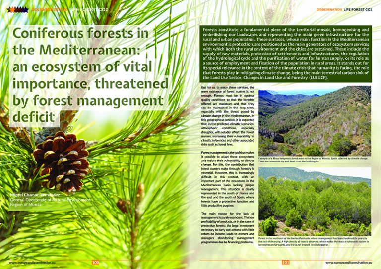 Coniferous forests in the Mediterranean: an ecosystem of vital importance, threatened by forest management deficit